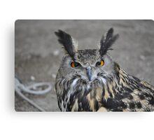 Birds of Prey show Canvas Print
