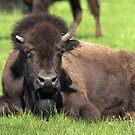 """Half-Horn"" Bison by JamesA1"