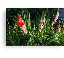 Glads in front yard Canvas Print