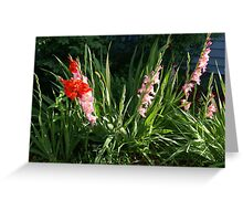 Glads in front yard Greeting Card