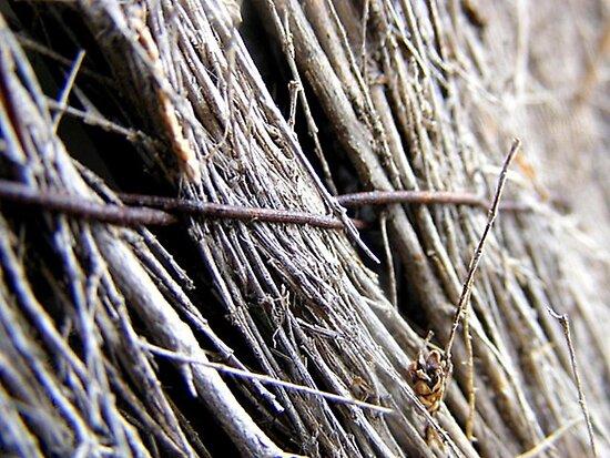 Fenced. by Elizabeth Rose Rawlings