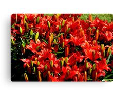 Fiery Lily's Canvas Print