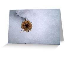 brave the cold Greeting Card