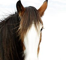 Clydesdale Mare by TeAnne