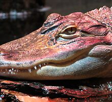 Red Gator by MaryGerken