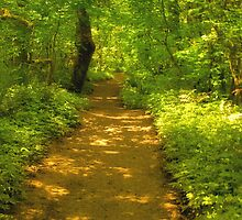 Pathway in the woods by Kay Martin
