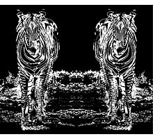 Sixteen Legs Of Zebras Photographic Print