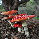 Mushroom Family by JaninesWorld