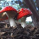 Mushroom Twins by JaninesWorld