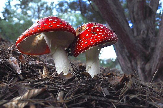 Mushroom Twins by JaninesWorld