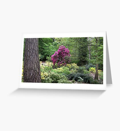 Richly Coloured Greeting Card