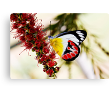 Scarlet Jezebel Canvas Print