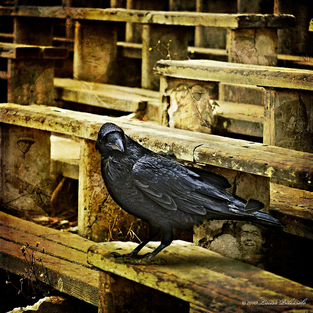 ...nevermore... by Laura Palazzolo