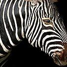 I Am A Zebra by miroslava