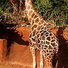 Very tall Boy! by Sandra Chung