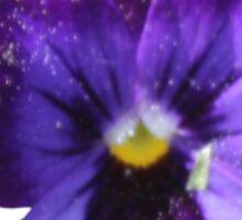 Purple Pansy Sticker