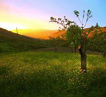 Alba del 6 maggio 2010, dalla mia finestra, Montecorone - ( zocca modena italy )_0894 Flickr by primo masotti