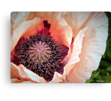 Poppy Love! Canvas Print