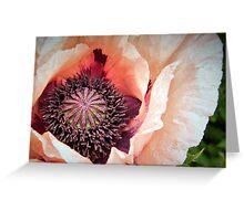 Poppy Love! Greeting Card