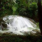 Mayan Jungle Waterfall by Zane Paxton