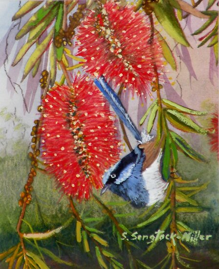"Blue Wren  ""Wren's Chatter""  SOLD Brisbane by Sandra  Sengstock-Miller"