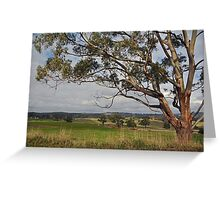 Old Gum Tree Greeting Card