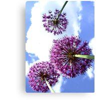 Alliums Canvas Print