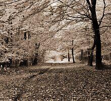 Autumn Woodland - Wrington, Somerset, England by Craig Joiner