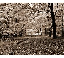 Autumn Woodland - Wrington, Somerset, England Photographic Print
