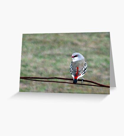 Diamond Firetail Greeting Card