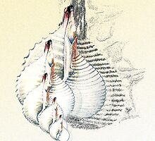 Shell graphics by artalacard