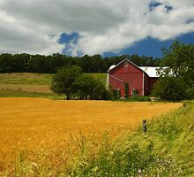 Red Barn and Wheatfield by Michael  Dreese