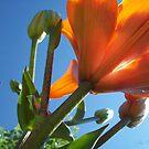 Through the Eyes of a Ladybug II by Cathy O. Lewis