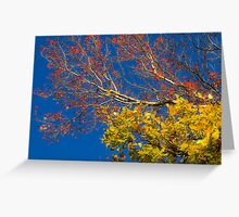 Primary Colours Tree Greeting Card