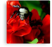 Beeing Very Colorful Canvas Print