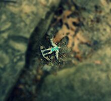 Alien Landing by Joseph Kutinsky