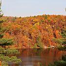 Pink Lake Fall Foliage by Janika