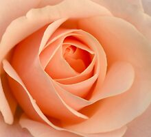 Portrait of a Rose by Lena127
