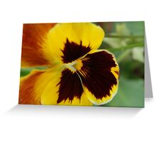 happy pansy Greeting Card