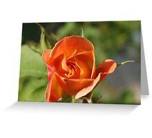 one beautiful rose bud Greeting Card