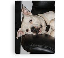 dog tired. Canvas Print