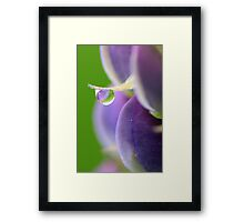 Lupin Dew Framed Print