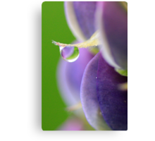 Lupin Dew Canvas Print