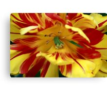 Red and yellow flower Canvas Print