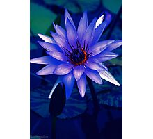 Lily Glow Photographic Print
