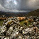 Sheep Fold by David Robinson