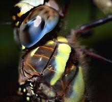 Dragonfly by Ian Sanders