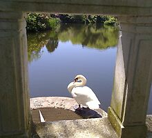 The Framed Swan by m0azc