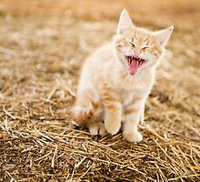 Kitteh Yawn by Sam Scholes