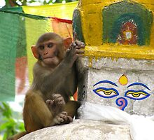 Monkey Lookout, Swayambhunath, Kathmandu by Maggie Woods